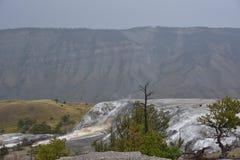 Mammoth Hot Springs alla sosta nazionale del Yellowstone Fotografia Stock Libera da Diritti