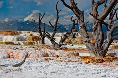Mammoth Hot Springs At Yellowstone National Park Stock Photo