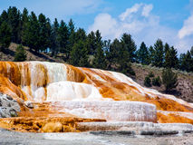 Calcare a terrazze a Mammoth Hot Springs Immagine Stock