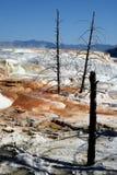 Mammoth Hot Springs nella sosta nazionale del Yellowstone fotografia stock libera da diritti