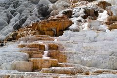 Mammoth Hot Springs nella sosta nazionale del Yellowstone fotografia stock