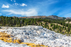 Mammoth Hot Springs Terrace Landscape Stock Image