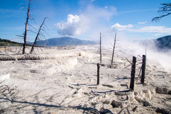 Mammoth Hot Springs Terraces Royalty Free Stock Photography