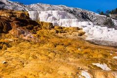 Mammoth Hot Springs terrass Royaltyfria Bilder