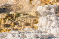 Mammoth hot springs travertine terraces in Yellowstone National Park Royalty Free Stock Images