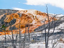 Mammoth Hot Springs Trees Stock Photo
