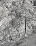 Mammoth Hot Springs Trees in Black and White Royalty Free Stock Photo