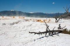 Mammoth Hot Springs vaggar vitt svavel- fältet i Yellowstone Royaltyfri Foto
