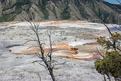 Mammoth Hot Springs weißes schwefliges Felsenfeld in Yellowstone stockfotografie