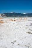 Mammoth Hot Springs weißes schwefliges Felsenfeld in Yellowstone lizenzfreie stockfotos