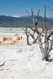Mammoth Hot Springs weißes schwefliges Felsenfeld in Yellowstone lizenzfreies stockfoto