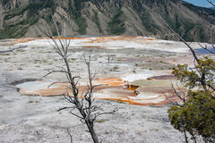 Mammoth Hot Springs White sulfuric rock field in Yellowstone Stock Photography