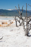 Mammoth Hot Springs White sulfuric rock field in Yellowstone Royalty Free Stock Photo