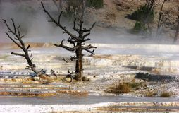 Mammoth Hot Springs, Yellow stone national park Royalty Free Stock Photos