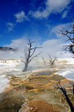 Mammoth Hot Springs yellowstone Fotografering för Bildbyråer