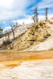 Mammoth Hot Springs in Yellowstone N.P. Stock Photos