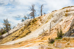 Mammoth Hot Springs in Yellowstone N.P. Royalty Free Stock Images