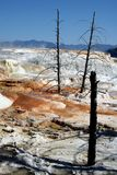Mammoth hot springs in Yellowstone National Park. Yellowstone National Park scenery, USA Royalty Free Stock Photography