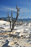Mammoth Hot Springs. In Yellowstone National Park Royalty Free Stock Images