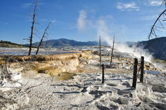 Mammoth Hot Springs. In Yellowstone National Park Stock Photo