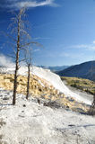 Mammoth Hot Springs. In Yellowstone National Park Stock Photography