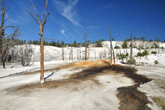 Mammoth Hot Springs. In Yellowstone National Park Royalty Free Stock Photos