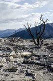 Mammoth Hot Springs in Yellowstone Stock Images