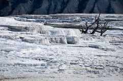 Mammoth hot springs, Yellowstone National Park Royalty Free Stock Photos