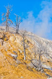Mammoth Hot Springs in Yellowstone National Park. USA Royalty Free Stock Photo