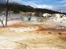 Mammoth Hot Springs Yellowstone nationalpark Fotografering för Bildbyråer