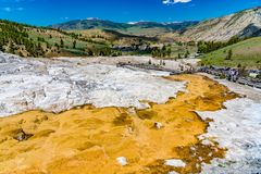 Mammoth Hot Springs, Yellowstone Nationalpark Stockfotos