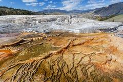 Mammoth Hot Springs, Yellowstone, Wyoming, los E.E.U.U. Fotos de archivo libres de regalías