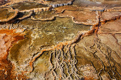 Mammoth Hot Springs, Yellowstone, Wyoming, los E.E.U.U. Fotos de archivo
