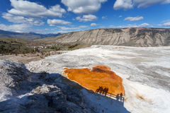 Mammoth Hot Springs, Yellowstone, Wyoming, USA Lizenzfreies Stockfoto