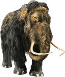 Woolly Mammoth. Isolated image of a mammoth on white background royalty free stock photography