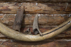 Mammoth ivory and horn of a bull on the wall of an ancient wooden frame. Stock Photo