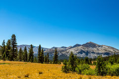 Mammoth Peak. Is at the northern end of the Kuna Crest in Yosemite National Park, very close to CA State route 120. Its summit appears rounded and rocky from Royalty Free Stock Photos