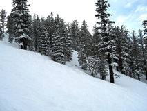 Mammoth Slopes Royalty Free Stock Photography