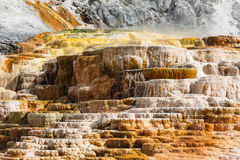 Mammoth Terraces in Yellowstone Stock Image
