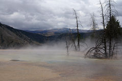 Mammoth thermal springs, Yellowstone park, USA Royalty Free Stock Photos