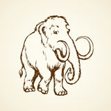 Mammoth. Vector drawing Royalty Free Stock Image