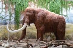 Mammut Lizenzfreie Stockbilder