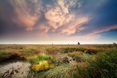 Mammut clouds over bog Stock Photography