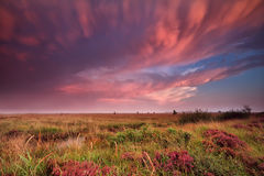 Mammut clouds over swamp during dramatic sunset Stock Photo