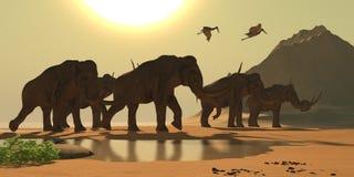 Mammut colombiano Fotografia Stock Libera da Diritti