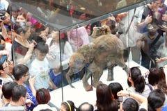 Mammut della mostra di periodo di glaciazione a Hong Kong Immagini Stock Libere da Diritti