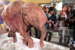 Mammut della mostra di periodo di glaciazione a Hong Kong Immagini Stock