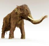 Mammut lanoso su fondo bianco Immagine Stock