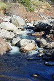 Mammutbaum-Fluss Stockfotografie