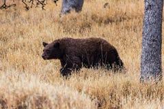 Mammutbaum nationales Park Lizenzfreie Stockfotos